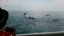 イルカを見るなら今ですよ!